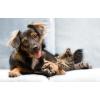 Ветеринарная вызывная служба Динго